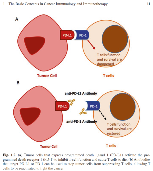 Figure 1.2 Immunotherapy